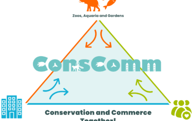The ConsComm Triangle: Conservation and Commerce together!